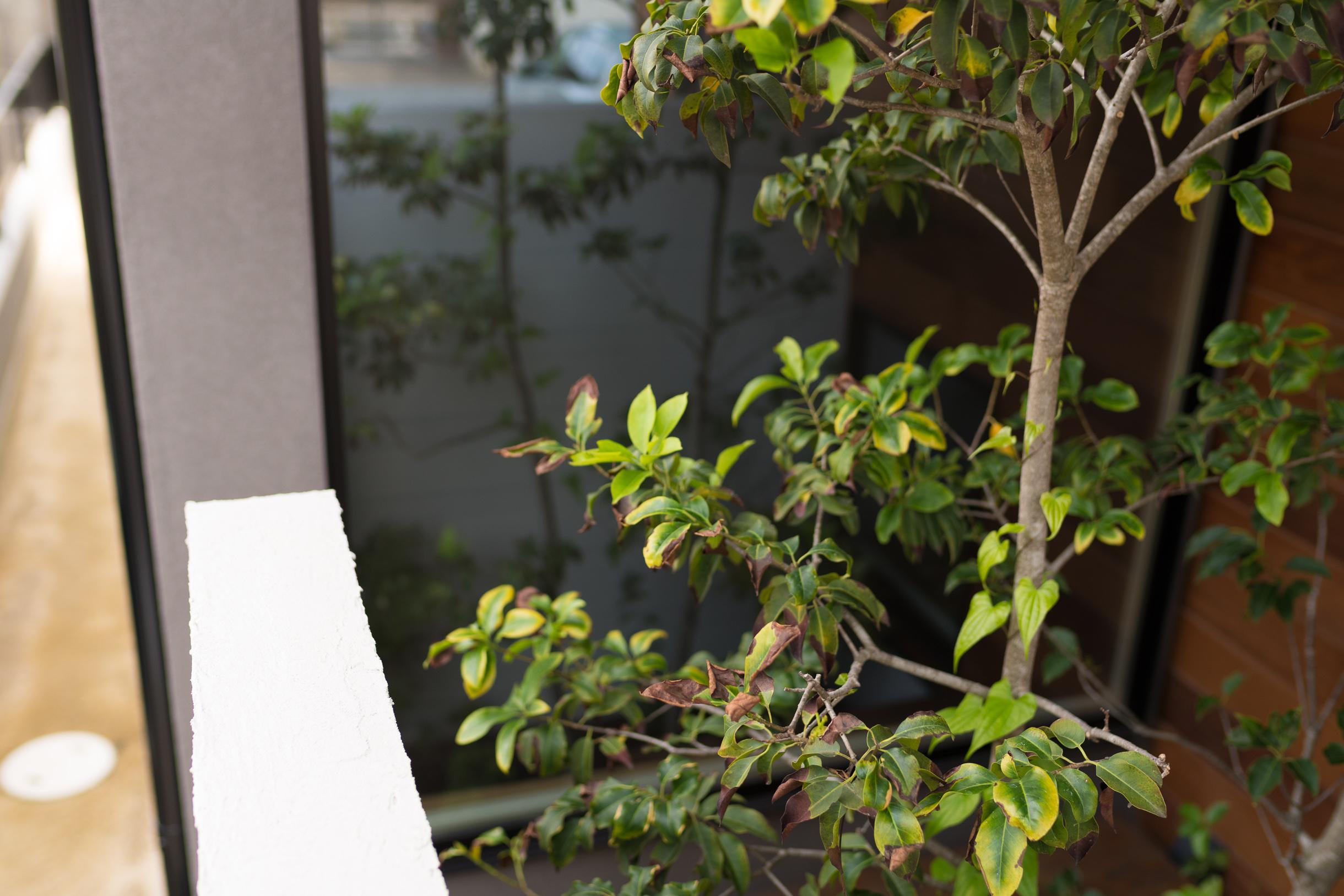 福山市の注文住宅|今井住建の施工事例ギャラリー「玄関横には植樹は必須」